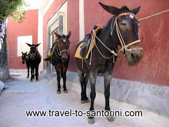 Donkeys and mules -