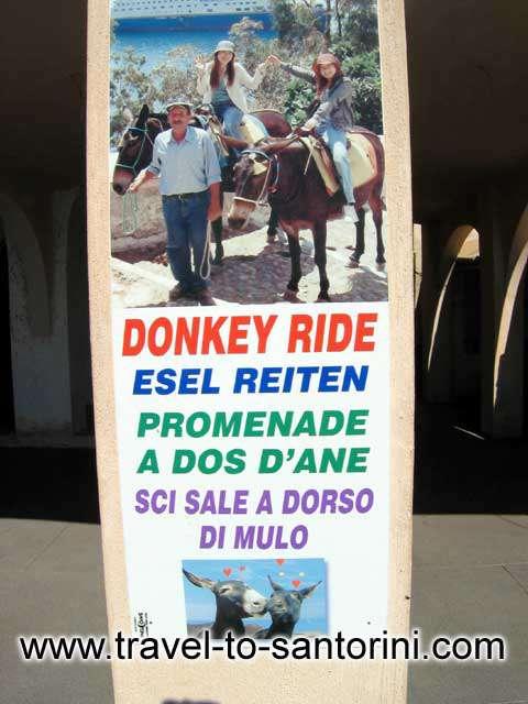 Donkey ride ad -